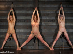 Three stretched and bound tgether girls gets - XXXonXXX - Pic 2