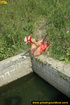 Lady in red with hot small tits hangs up on stone ledge to pee in water