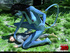 Big female blue striped creature with a tail…