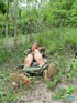 Gent in the woods makes his pecker shoot hot cum.