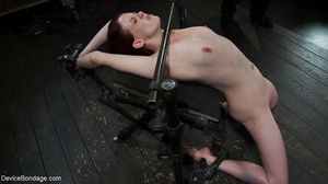 Red and raised cane marks adorn a ginger - XXX Dessert - Picture 10