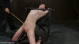Red and raised cane marks adorn a ginger - XXX Dessert - Picture 16