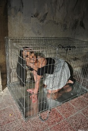 caged brunette with ponytailed
