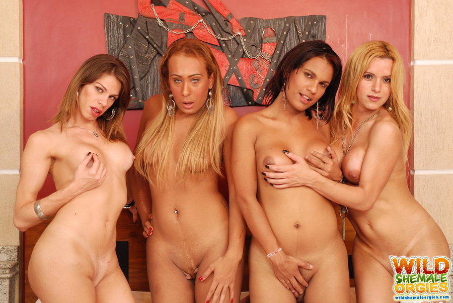 Awesome she male orgy looking