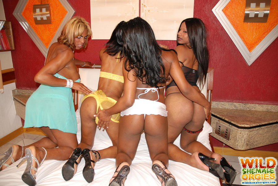 Black shemale orgies