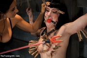 hot brunette roped and