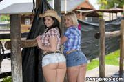 farmland ass