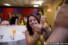 bear, party, sucking, wedding
