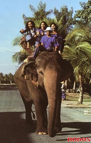 elephant riding babes fucked