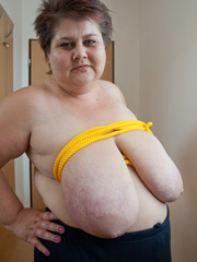 Short-haired mature bitch plying with a yellow rope - Picture 4