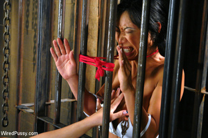 Asian babe caged and zapped, made to lic - XXX Dessert - Picture 3