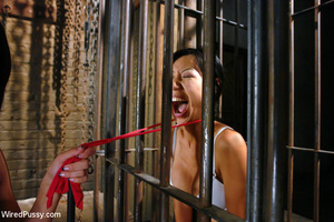 Asian babe caged and zapped, made to lic - XXX Dessert - Picture 7