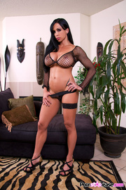 cat black mesh lingerie